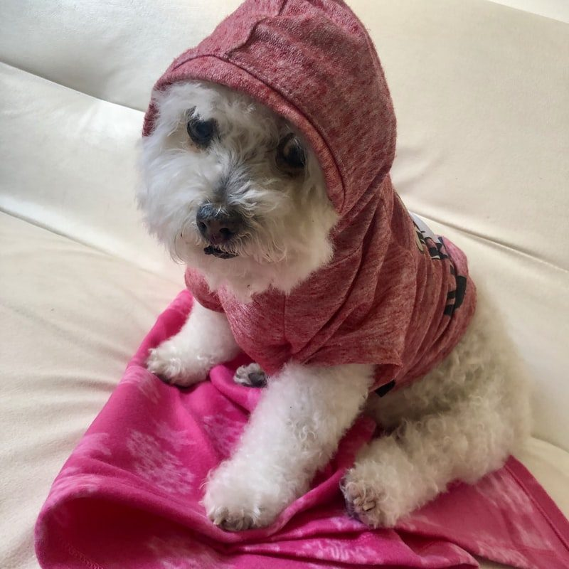 Small Dog Hoodie By - Post Thumbnail
